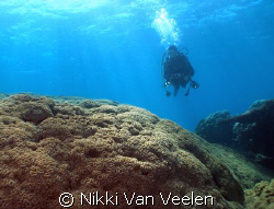 Anel and huge coral in Nabq Park taken with E300. by Nikki Van Veelen 